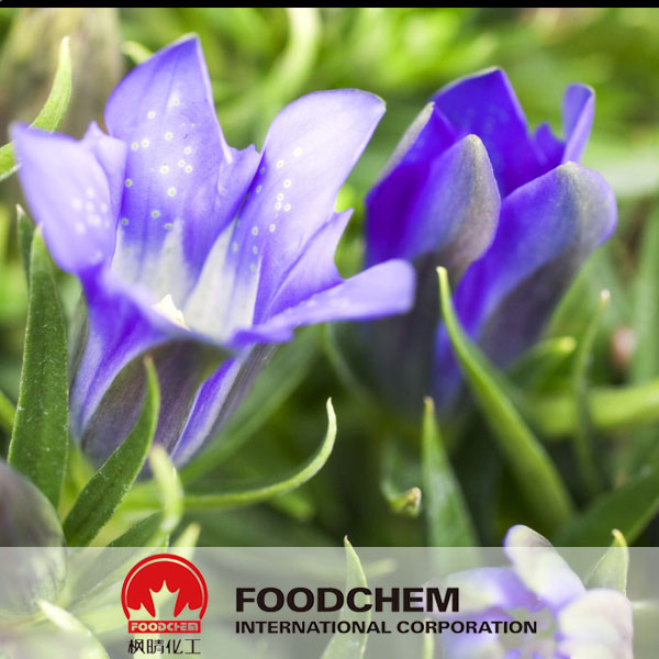 Gentian Root Extract