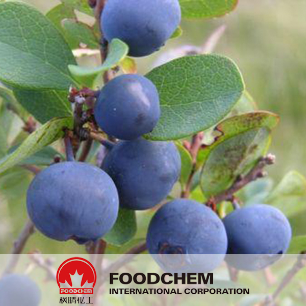 Bilberry Anthocyanins